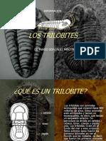 los-trilobites-1229424295307613-2