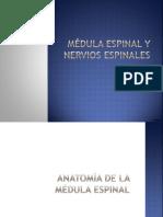 Medula espinal.pptx