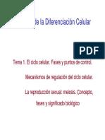 Tema 1 BDC. El Ciclo Celular. 10x11
