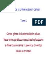 Tema 5 BDC. Control Gxnico de La Diferenciacixn Celular