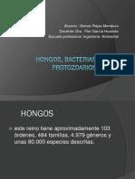 SEMANA10_hongos