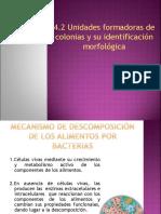 4.2 Unidades Formadoras de Colonias y Su Identificación Morfológica (1)