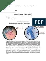 Evolucion Del Gametofito