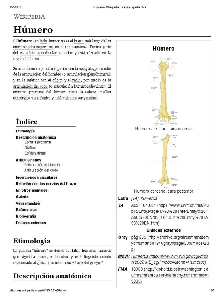 Húmero - Wikipedia, La Enciclopedia Libre