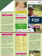 Brochure INTA FORTALEZA.pdf