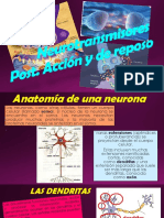 Neurotransmisores Expo