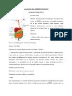 Aparato Digestivo, Respiratorio, Circulatorio y Reproductivo