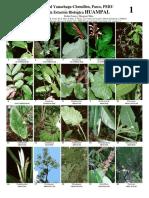 Flora de Yanachaga