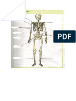partes del esqueleto para rellenar