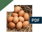Eggs- big