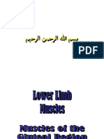 Muscles of Lower Limb(Clear)