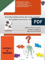 Actividad antibacteriana del aceite esencial de la plantaLepechiniaconferta