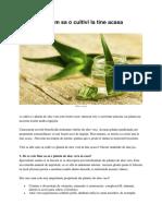Aloe Vera Cum Sa o Cultivi La Tine Acasa
