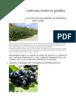 7 Motive Sa Cultivam Aronia in Gradina