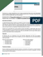 Clase 3 CIRUGÍA (II Parte) - Patología Pancreática