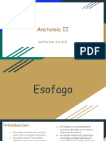 Esofago & Estomago