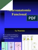 neuroanatomia 2013