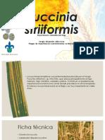 Puccinia striiformis