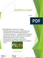 Moniliophthora roreri