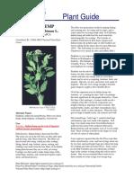 apocynum can.pdf