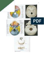 [BioSci Lec-Lab] Skeletal System.docx