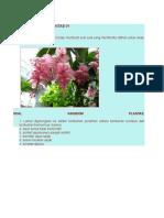Test Kingdom Plantae 01