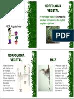 anatomia_vegetal.pdf