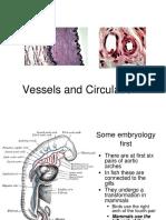 Anatomi Darah