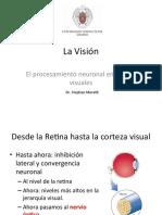 Tema 16 La Visión y el procesamiento neuronal en las vías visuales