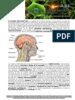 a01 - Conceptos Del Sistema Nervioso 2017
