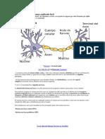Sistema Nervioso Humano Explicado Fácil