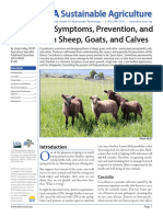Coccidiosis Sheep Goats Calves (1)