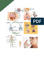 recortes sistemas del cuerpo.docx