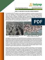 BE Pulgon Amarillo,Nueva Plaga en Mexico
