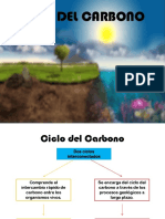 Ciclo Del Carbono.