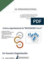 Cultura Organizacional Brayan