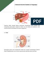 7 Organ Tubuh Manusia Beserta Gambar