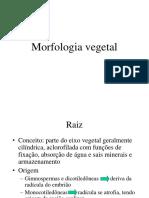Morfologiavegetal Ra_zes 2