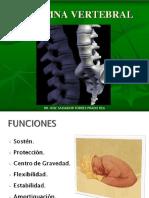 anatomiadecolumna