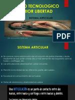 Sistema Articular 3