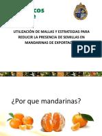 DISEO-DE-UNA-ESTRATEGIA-PARA-REDUCIR-SEMILLAS-Comite-de-Citricos.pdf