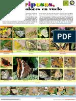 las_mariposas_de_mi_huerta.pdf