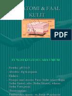 Anatomi & Faal Kulit