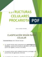 2. Estructura Celular Procariota