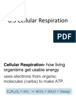 ch 8-3 cellular respiration