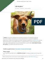 Reducir El Estrés Del Perro