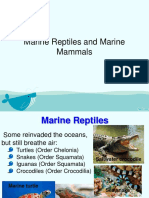 Marine Reptile and Mammal
