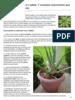 Cultivo de Aloe Vera o Sábila 7 Consejos Importantes Que Debes Tener en Cuenta
