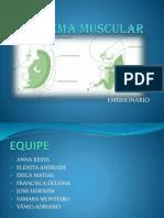 CORREÇÃO SISTEMA MUSCULAR.pptx