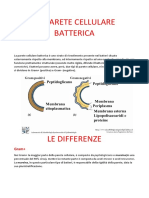 Parete Cellulare Batterica